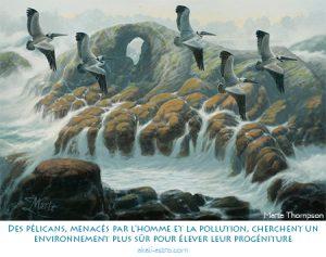 Des pélicans, menacés par l'homme et la pollution, cherchent un environnement plus sûr pour élever leur progéniture
