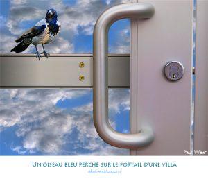 Un oiseau bleu perché sur le portail d'une villa