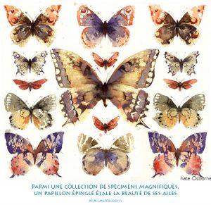 Parmi une collection de spécimens magnifiques, un papillon épinglé étale la beauté de ses ailes