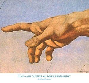 Une main ouverte au pouce proéminent